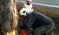 24.3.2012 - Kácení stromů